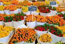 Netherlands - Molens, tulpen en meisjes op klompen / Reizen in Nederland - Travel in the Netherlands