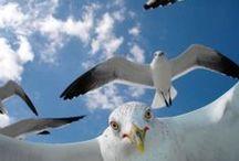 Birds on Tybee