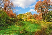 Fall Landscapes / Photos of fall / autumn landscapes from Central Park and other locations