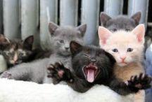 CATS & CO / Photos de petites boules de poils www.mllebride.com