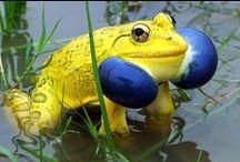 удивительные лягушки