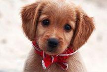 Cute Pets / by Louise J.