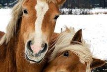 грациозные лошади