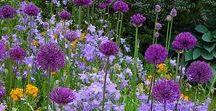 Прекрасные сады. Beautiful gardens.