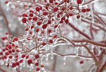 Зима. Winter.