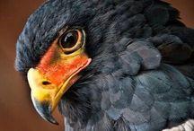 Birds of prey,beauties in the sky