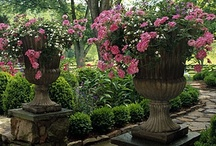 Flowers & Beautiful Gardens / The Beauty of Nature and Flowers can enhance any part of your Life.