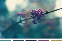 Colors / Colorcombination