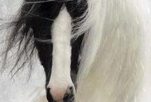 caballos / c
