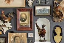 Curious Decor: Curios, Collections & Compartments to Contain Them