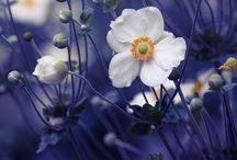 Flora / Have og blomster