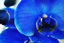 blue & deep.