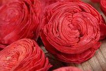 Crimson Red / Crimson Red  Colour Palettes