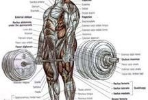 Muscles, joints and related / Health