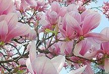❤ Seasons: spring ❤