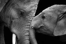 ❤ Photography: wildlife ❤