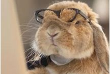 """Pets & Glasses / Have you also seen the funny pictures all over the internet with animals wearing glasses or sunglasses? Well, we have collected them, so that you can have a good laugh or an """"Awww is that cute!""""-moment."""
