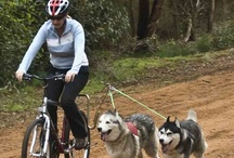 """Springer Bike Attachment  / The ultimate bike accessory to allow you and your dog to safely ride together. Unlike other bike attachments Springer is designed with a low centre of gravity, the effective point that the dogs pull from is the bottom of the """"U"""" in the tube."""