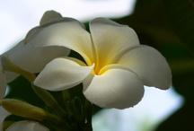 Flowers / <3