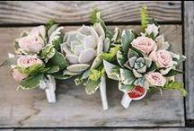 Wedding - Succulents