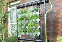 Growing Herbs with Hydroponics / Examples of hydroponic herb growing systems. / by HerbGardening.com