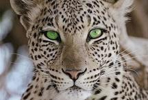 Animals / by Marjorie Lamantia