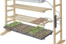 Greenhousing  / Growing greens in houses.