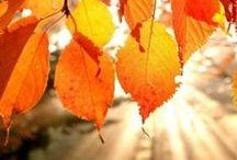 photos *-*