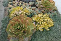 Gardening succulent, aloes, cactus