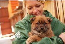 Állatvédelem