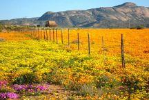 South Africa - West Coast & Namaqualand