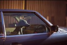 The silence of dogs in cars / Photo: Martin Usborne