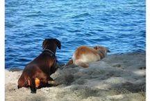 Kutyabarát strandok, kutyás strandok / Strandok és vízpartok, ahol kutyáddal is megmártózhatsz!