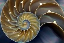 fractals  / Fractals, geometry, divine geometry, Mandelbrot,