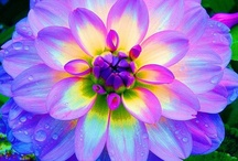 Beautiful colourful pictures