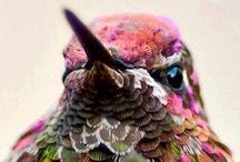 ★ HUMMING BIRD