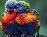 A tire d'ailes... / Des oiseaux de toutes les couleurs...