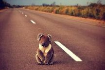 Cute Animals :D