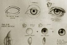 Anatomy Study: Eyes / Reference material to understand the design of eyes for visual art.