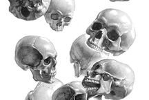 Anatomy Study: Head / Skull / Reference material to understand the design of skulls / heads for visual art.