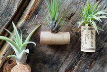 Cosy ♡ Home DIYs / Lass Dich inspirieren und denke Dein Zuhause neu: Tipps & Ideen zum Selbermachen.