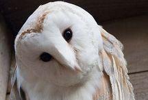 Owls / by Daniela LaSignoraMarinelli