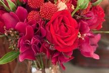 Red Crimson Burgundy Scarlet
