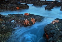 Sea Creatures / by Lyn Thibodeaux