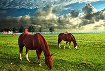 I am Horse Crazy!!! ♥ / 3 words describe it all!! ♥ I LOVE HORSES!!!!!!! ♥ / by Horse Crazy Girl <3