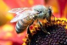 *~Bee-utiful~*