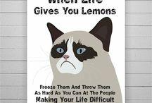 Grumpy cat / Grumpy cat is my cat lord......LOL