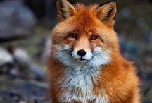 Animais / Criaturas preciosas