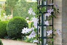 Köynnökset puutarhassa / Vain mielikuvitus on rajana köynnösten käytössä pihan vihreyttämisessä.