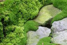 Sammalpuutarha - mossgarden / Mitä ei voi peittää, sitä pitää korostaa. Sammalpuutarha hurmaa vihreydellä ympäri vuoden.